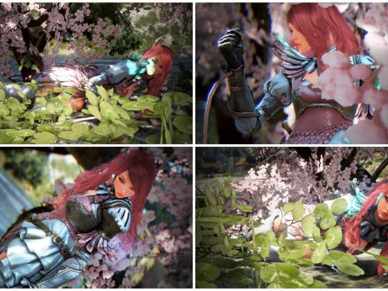 Frühlingsblüten <3