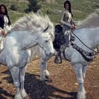 Edler Ritter auf weißem Pferd...?